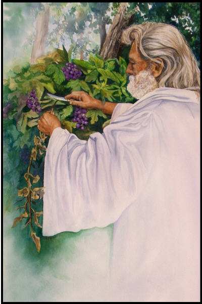 Image result for god pruning the vine""